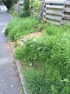 canterbury road undergrowth